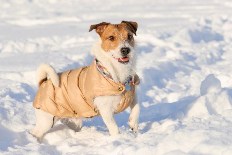 Hond met hondenkleding