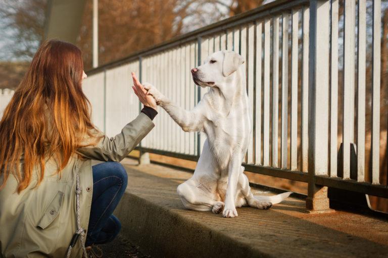 Leer je hond luisteren