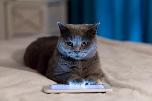 Katten speelt met kattenapp