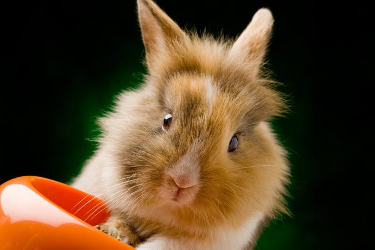 Konijnen optimaal voeden – het juiste voer voor konijnen