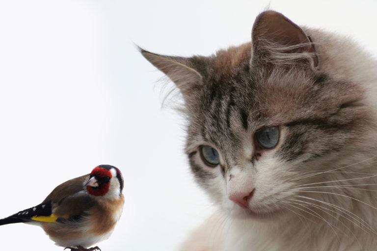 Katten en vogels onder één dak