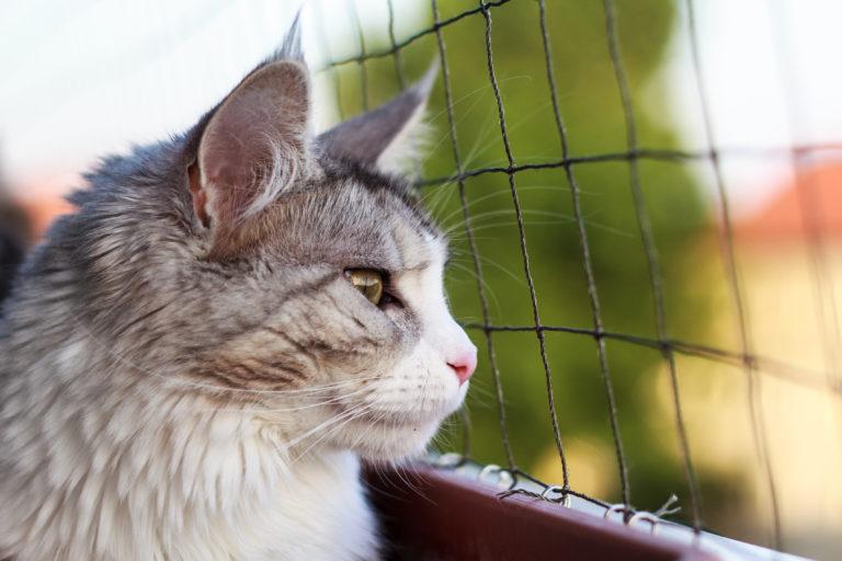 Geluk in een klein hoekje met het kattennet