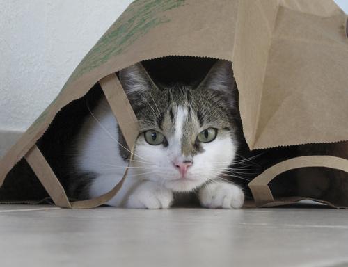 Kat verstoppertje spelen