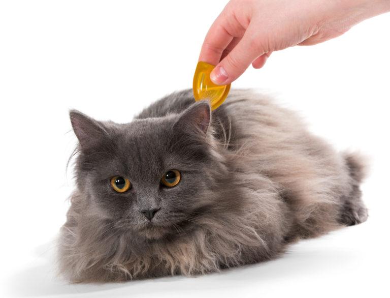 vlooien en teken bij katten verwijderen