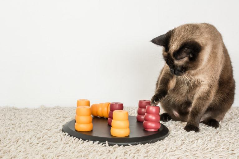 intelligentiespeelgoed voor kattten