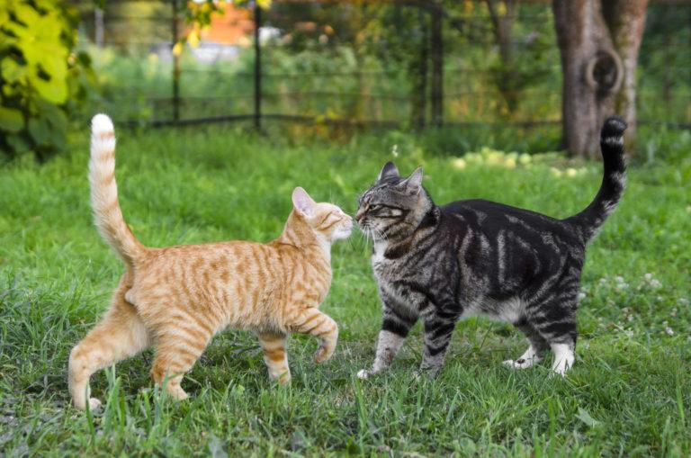 katten bij elkaar zetten