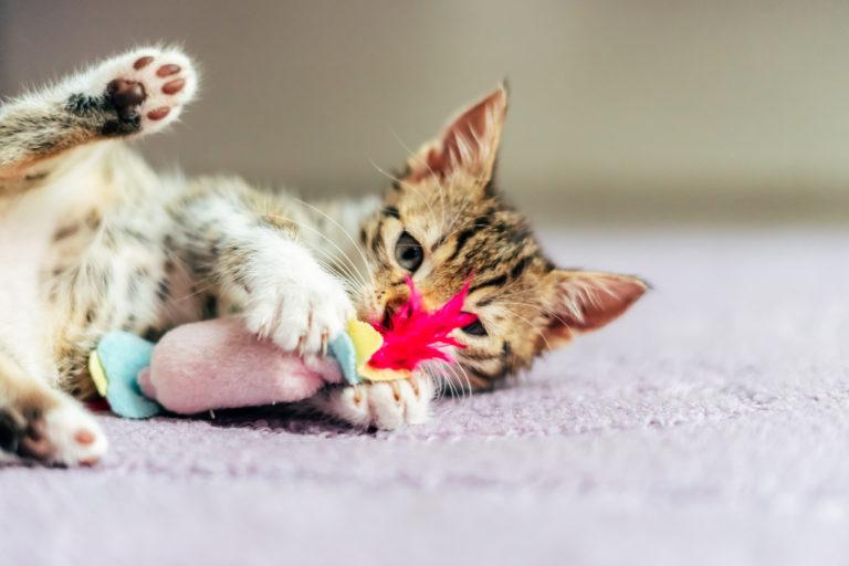 spelen met katten