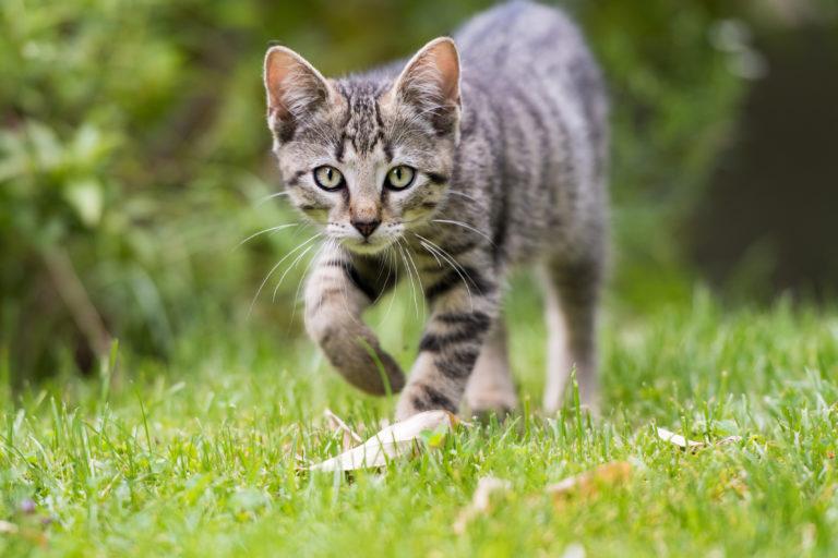 Een kattenproof tuin