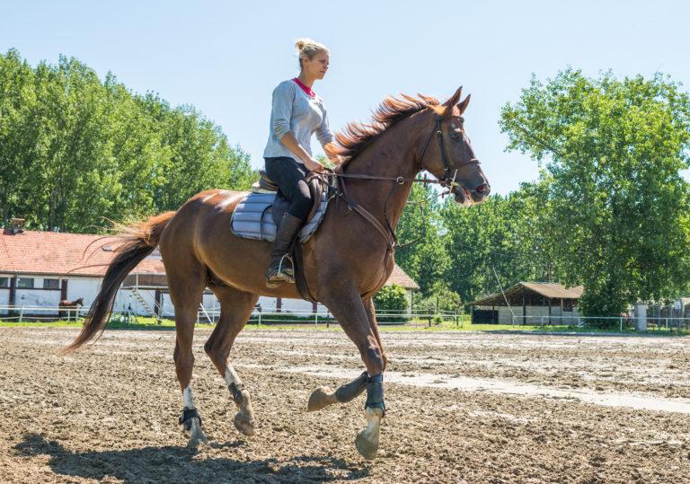 Paardrijden leren als volwassene