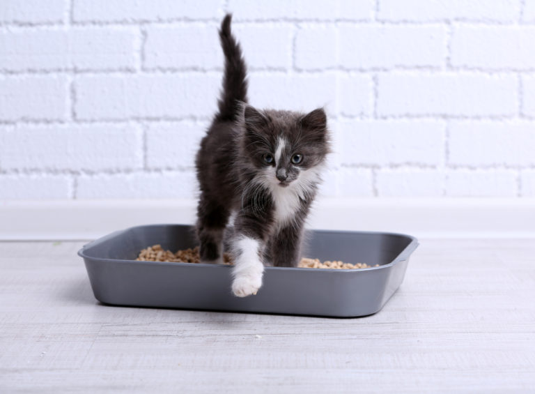 De correcte kattenbak