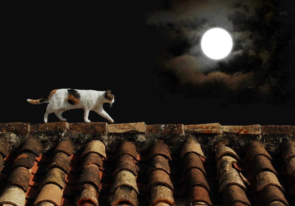 Kat 's nachts onderweg