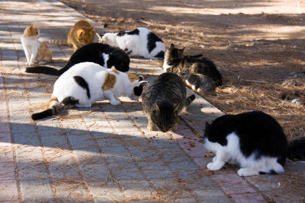 katten eten op straat