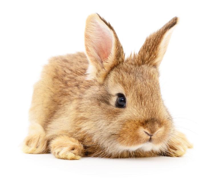 Een konijn in huis
