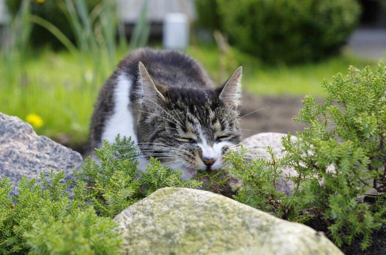 Kat eet giftige plant