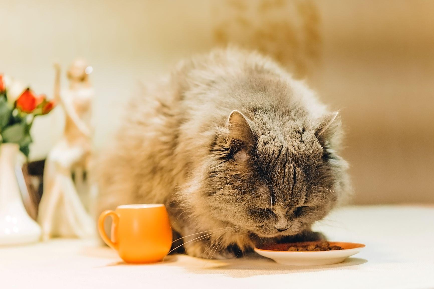 kat eet van schaaltje