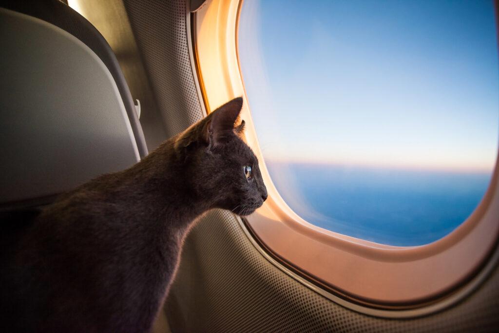 vliegen met kat