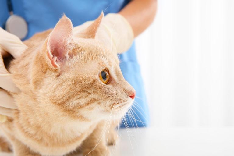 zenuwstelsel stoornis bij katten
