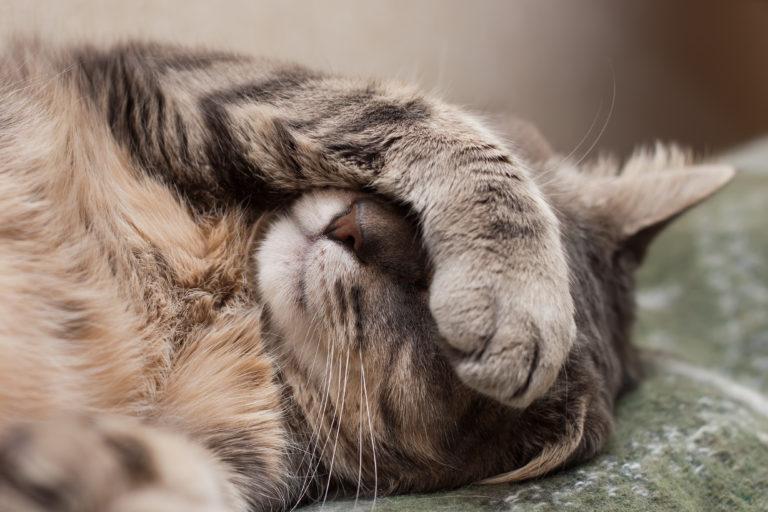 Ademproblemen bij katten