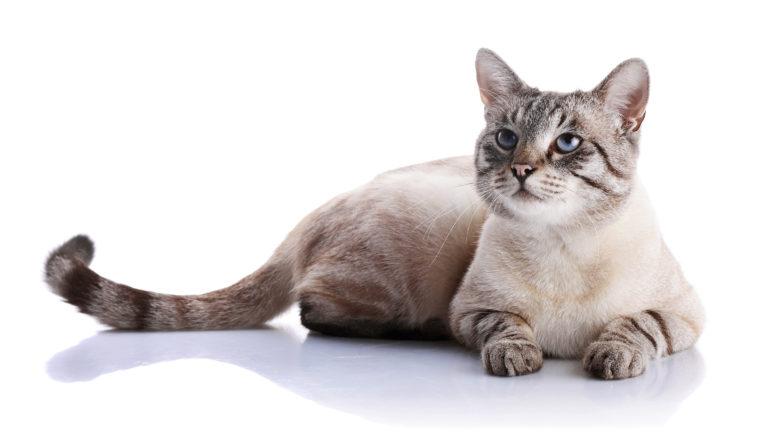 anticonceptie katten