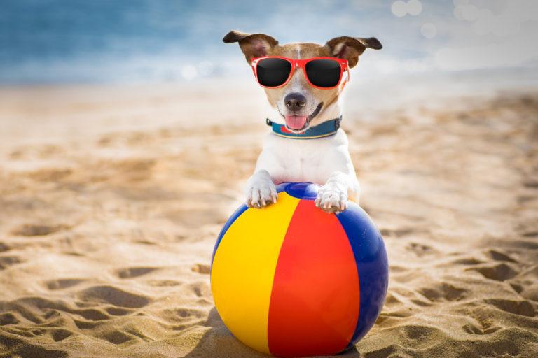 Top 11 hondenaccessoires voor de zomer