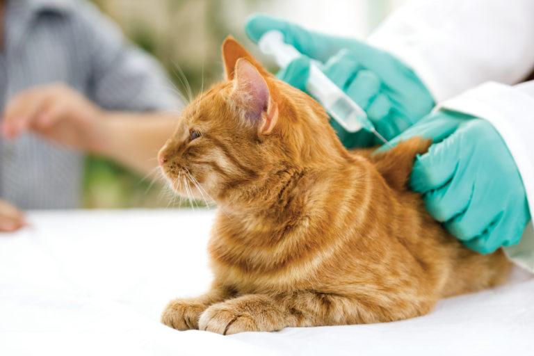 Inentingen kat