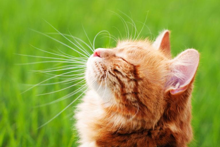 Top 11 kattenaccessoires voor de zomer