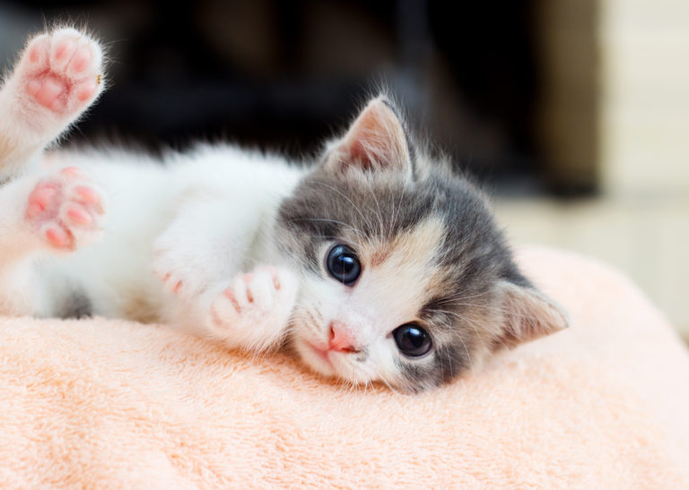 Kittens acclimatiseren