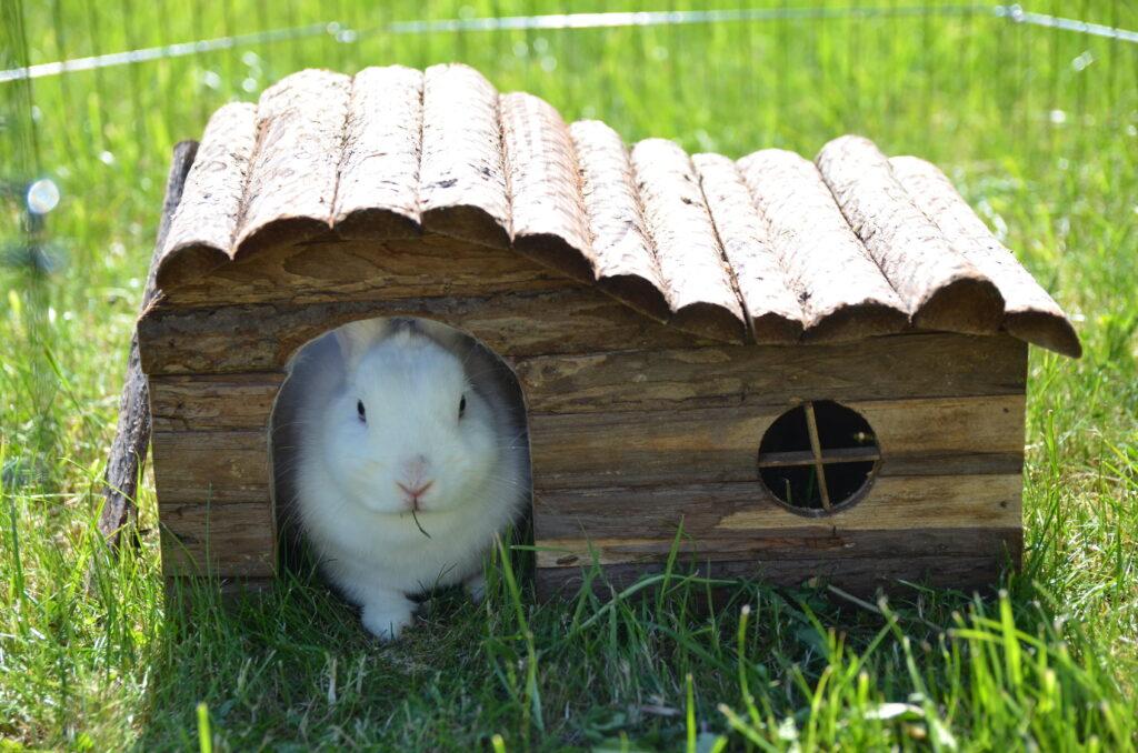 buitenverblijf konijn