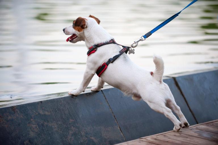 hondenhalsband versus hondentuig