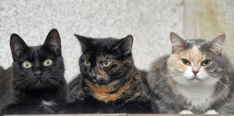 familie katten