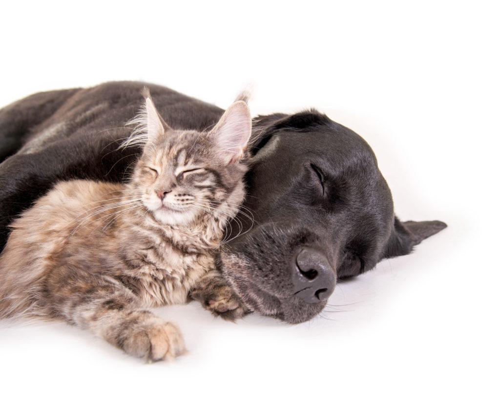 samenleven van honden en katten