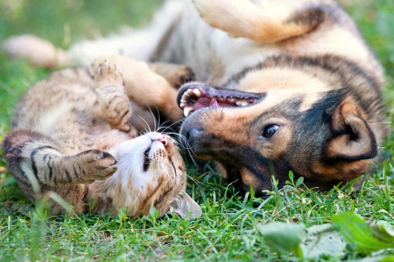 Kattenbezitter versus hondenbezitter