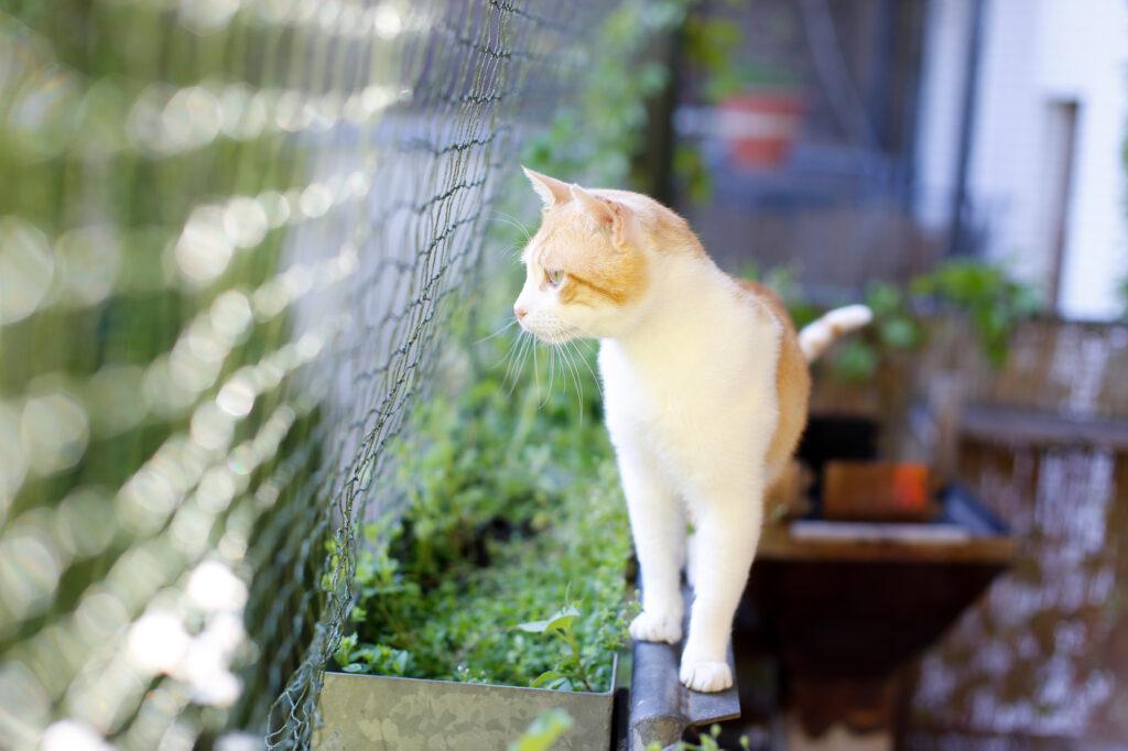 kat kijkt door net op balkon