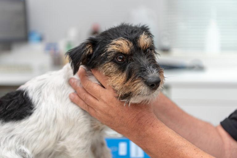 Schildklierhypofunctie hond
