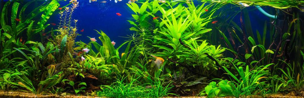 zoetwatervissen