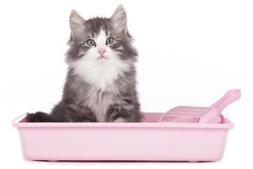 diarree bij kittens