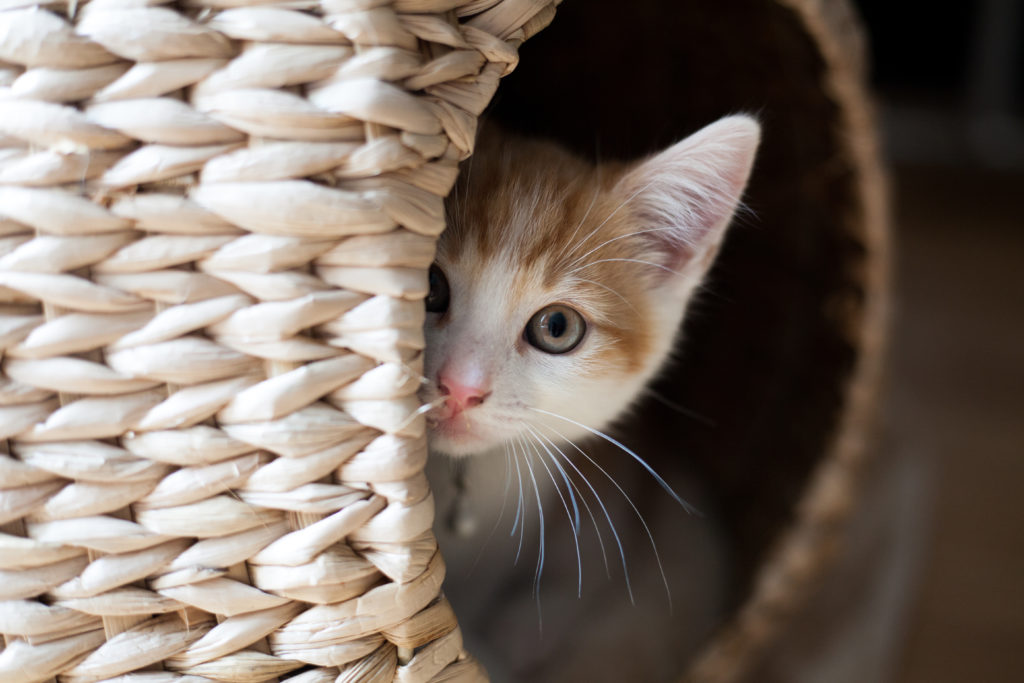 kat miauwt