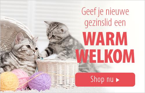 kittenwinkel