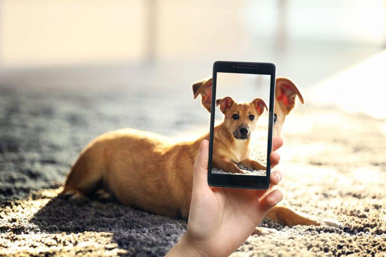 Hondenfoto met telefoon
