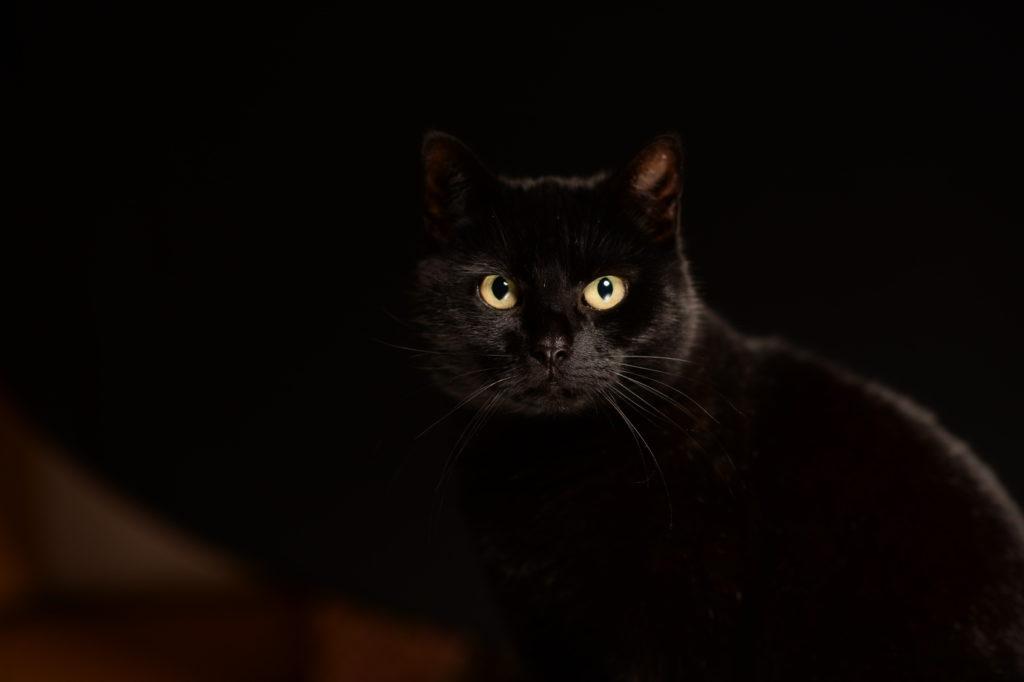 kattenogen en kattenoren schoonmaken