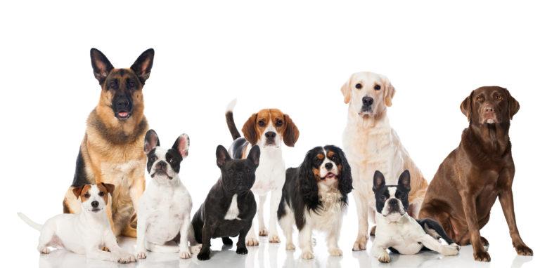 Rasspecifiek voer voor honden