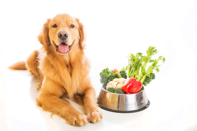 vegetarisch hondenvoer