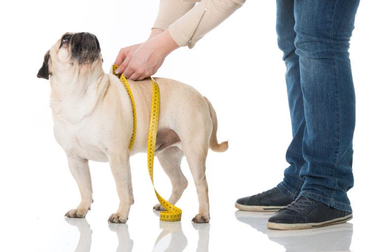 Het juiste hondenvoer bij overgewicht