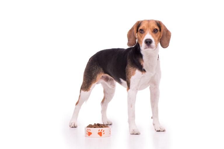 Voeding voor de Beagle