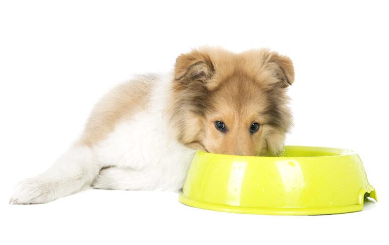 Het juiste voer voor de gecastreerde hond