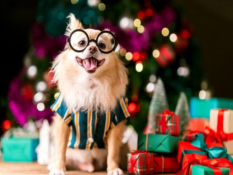 Kerstcadeaus voor honden