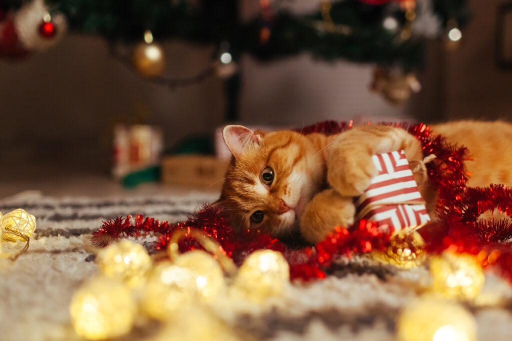 Kerstcadeaus voor katten