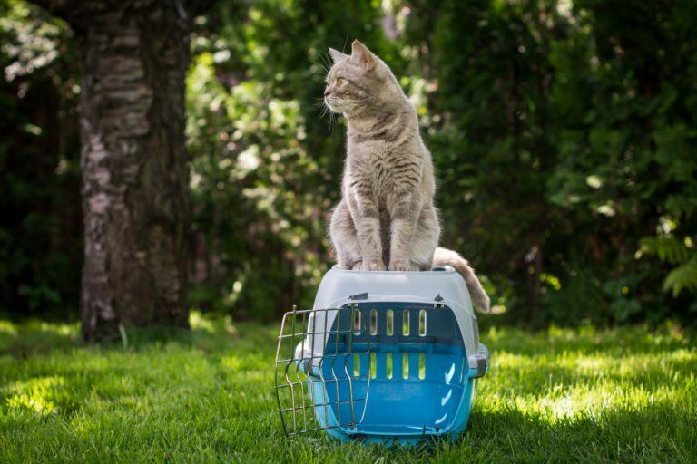 Kat op transportbox