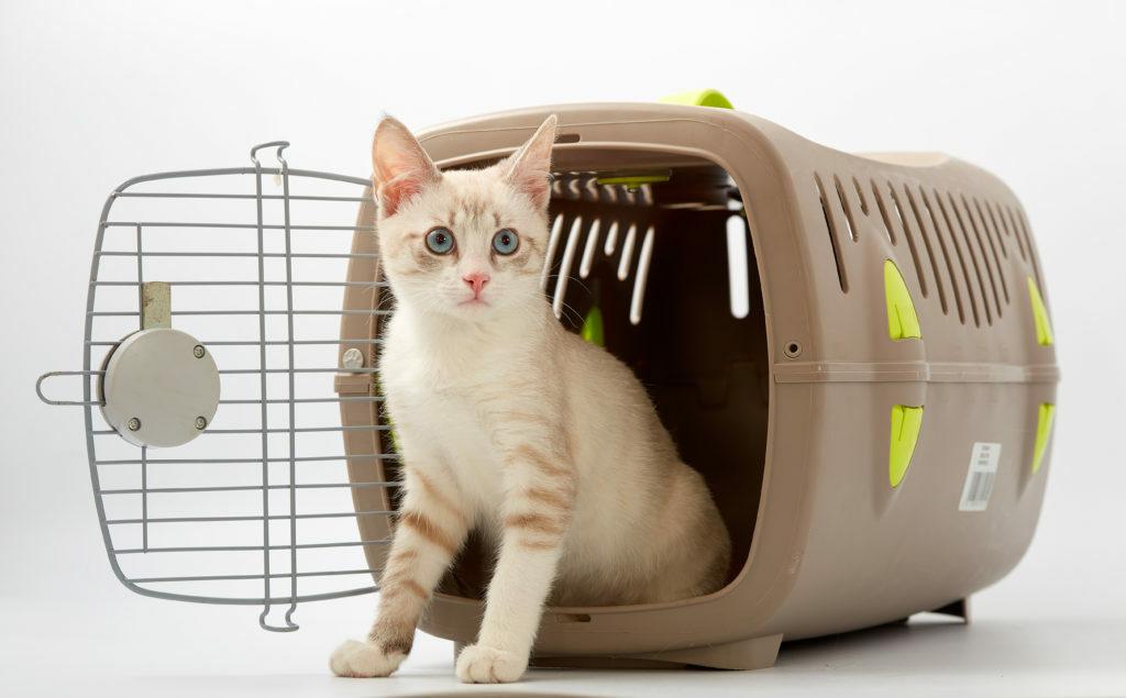 kat in transportbox