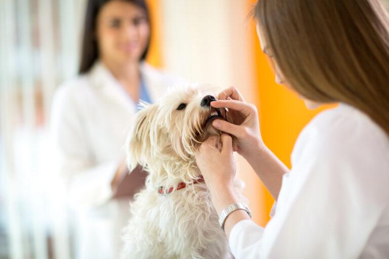 tandsteen bij honden